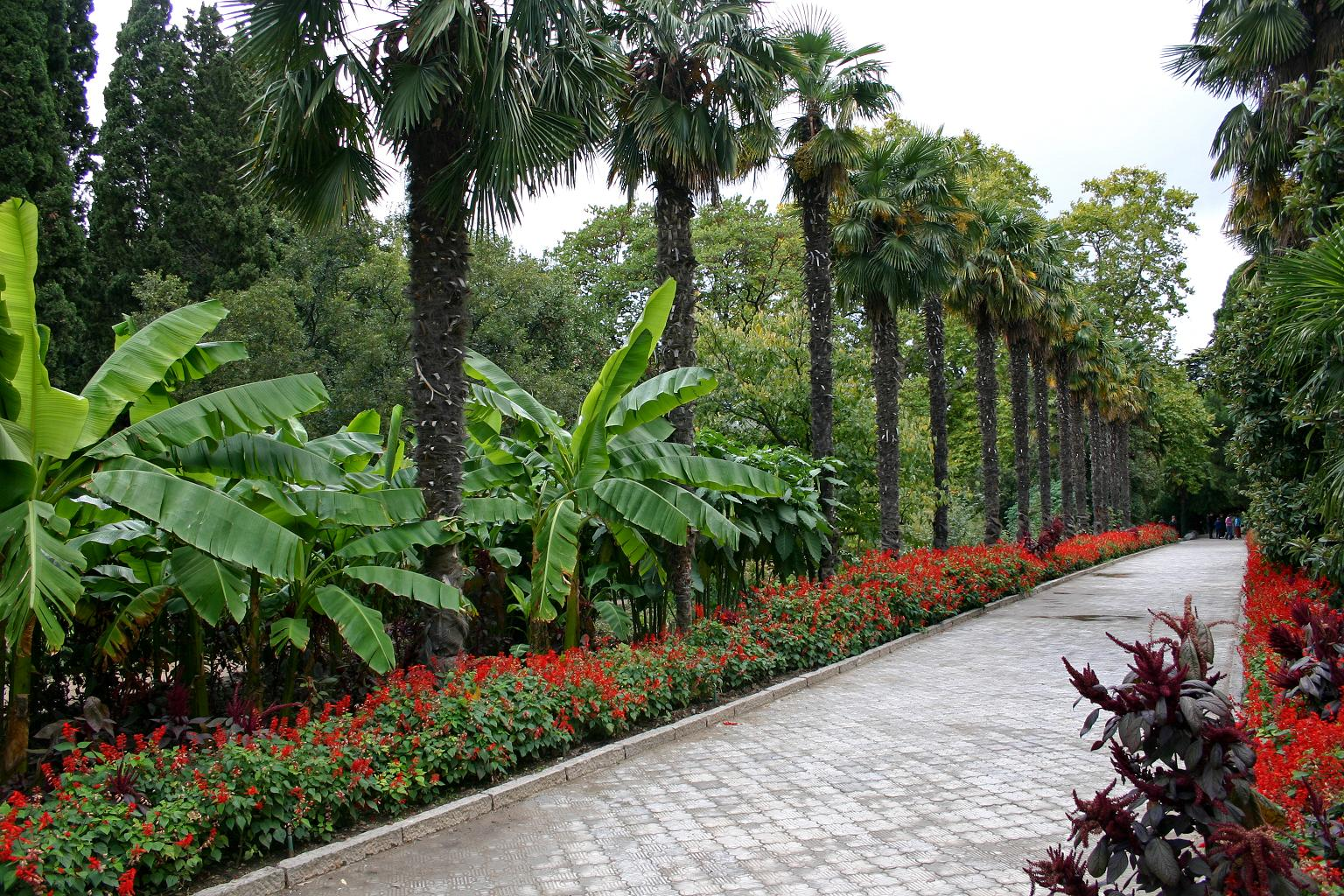 Купить розы в никитском ботаническом саду армавир уличные цветы купить